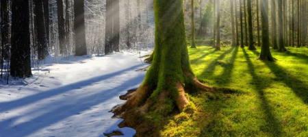 Земля переступила знаковый порог на фоне глобального потепления